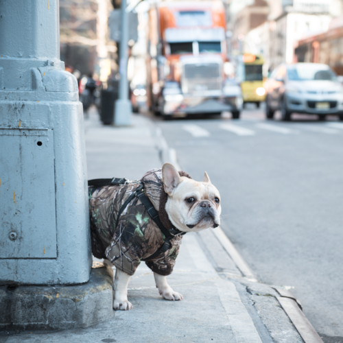 Grosse_Janet_08_Street_NYC.png
